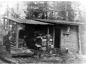 Cabin Alderwood
