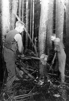 Laurence [age 21] and Leonard [16] cutting down a tree on their new ranch.