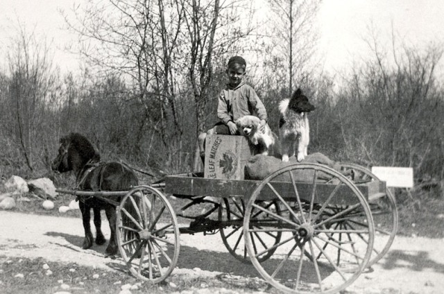 Norm Pelkey in his pony trap circa 1923. He delivered groceries for his parents' store to raise enough money to feed his collection of pets.