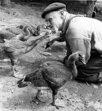 Alfred Rieboldt in 1973, feeding some ducks.